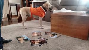 perro de terapia en sesión de TAA
