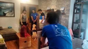 entrenamiento en casa de perro de asistencia